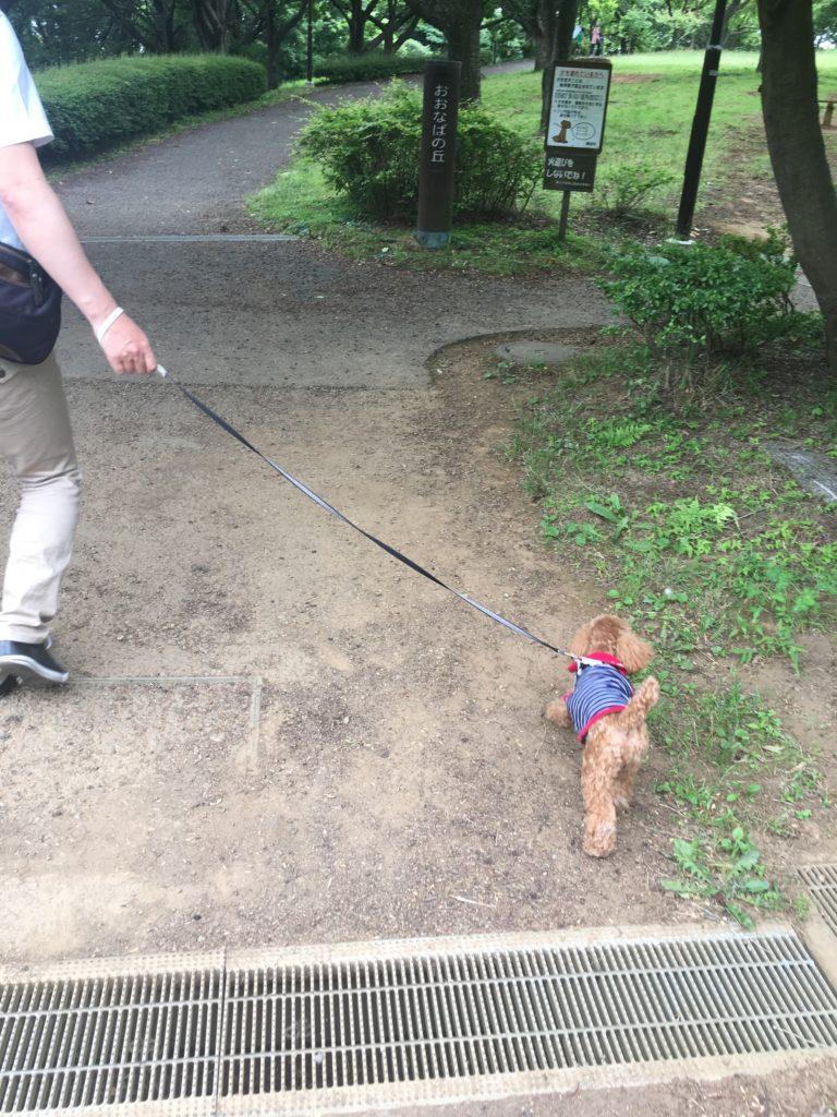 舞岡公園をお散歩アンバー