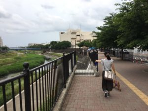 柏尾川散歩