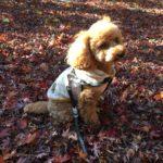 冬のお散歩、葉っぱの感触♡
