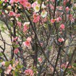 春日和な1日