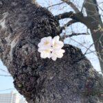 春の醍醐味